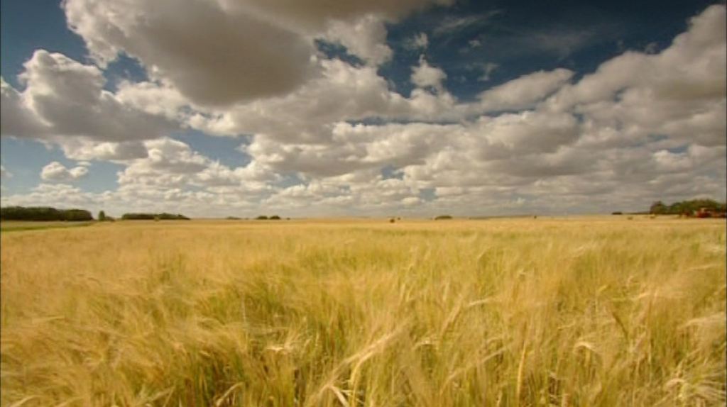 field of wheat | Films by and about women in the Swarthmore/Bryn Mawr ...